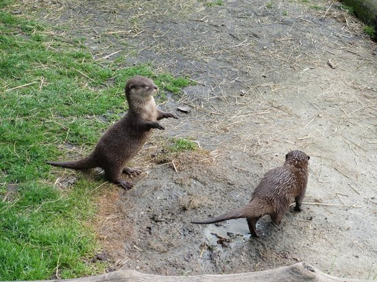 Trevalgas Cottages: Tamar Otter & Wildlife Centre