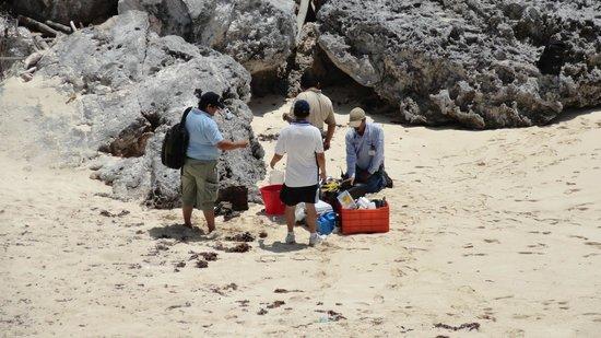 Avenida Tulum: Sea turtle team