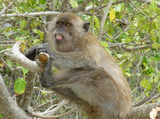Simba Sea Trips: Phi Phi Island Trip 2010-Monkey Island
