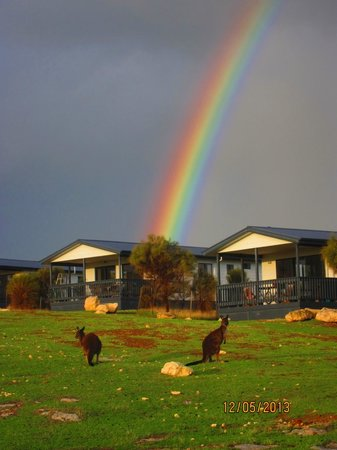 Waves and Wildlife Cottages: kangaroo rainbow