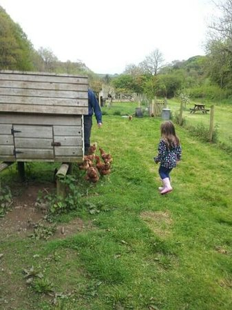 Ruthern Valley Holidays: our daughter looking for eggs