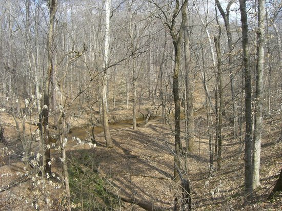 Pocahontas State Park: Wooded Trail