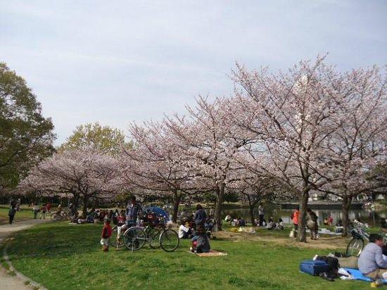 Daisen Park : お花見