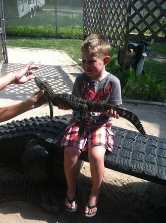 Airboat Adventure: holding a gator before the ride!