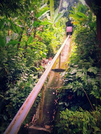 Nandini Bali Jungle Resort & Spa: the tram that takes you up and down a few levels!:)