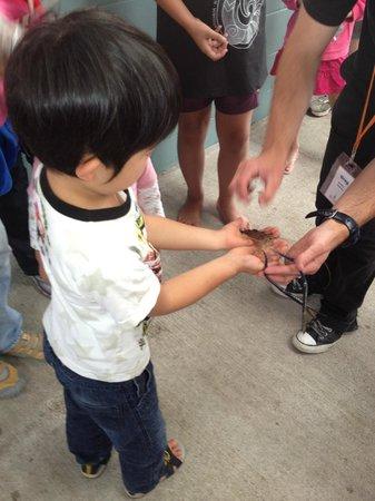 Huka Prawn Park : 養殖しているエビを手にとって見せてくれます