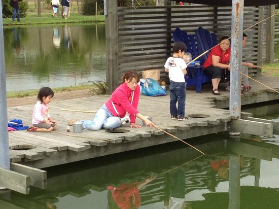 Huka Prawn Park : 釣り堀でエビを釣ってます