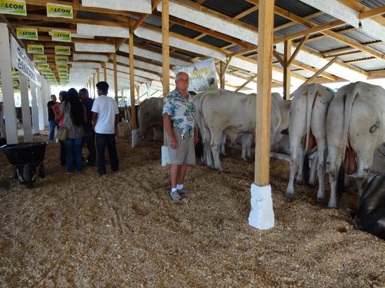 Ensuenos Del Mar S.A.: Me at the AG show here in La Ceiba