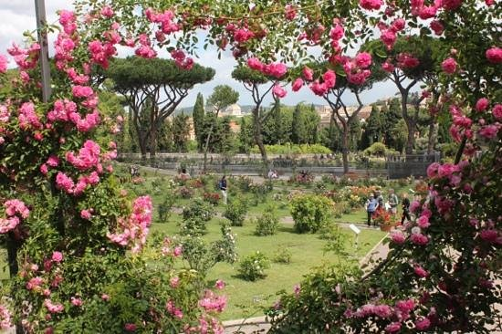 Roses In Garden: Picture Of Municipal Rose Garden (Roseto