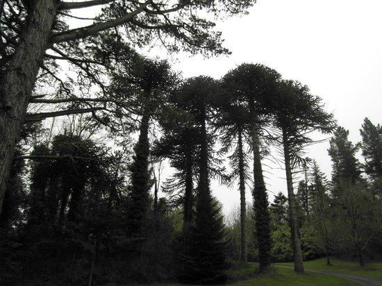 Sightseeing in the neighbourhood of Corrib View Lodge