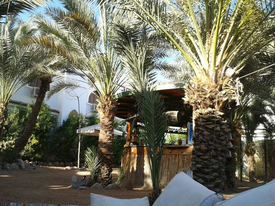South North - Tea Garden & Culture Cafe: The beautiful palmtrees....