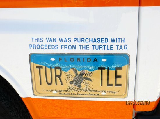 The Turtle Hospital: Turtle License Plate