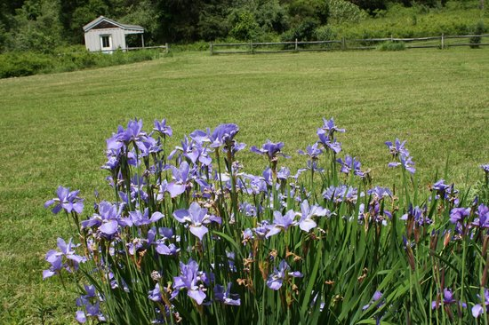 The Inn at Sugar Hollow Farm: Haydens' gardens abounding with insects of all kinds.