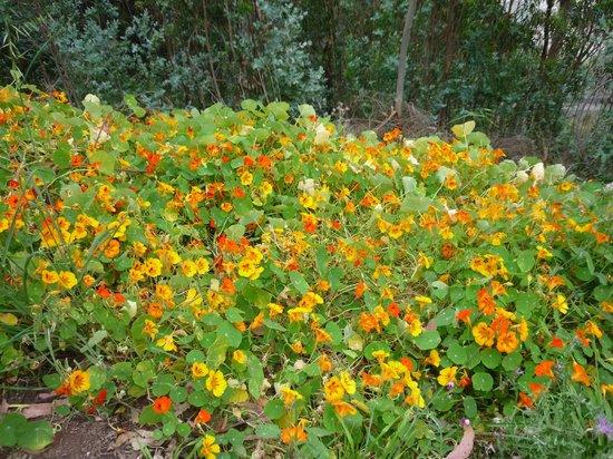 Quinta do Furao: bloemenborder