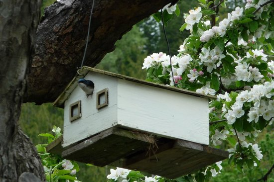 Ainsworth Motel: Ainswoth Motel for birds...