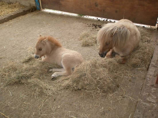 Godstone, UK : Pony with Foal