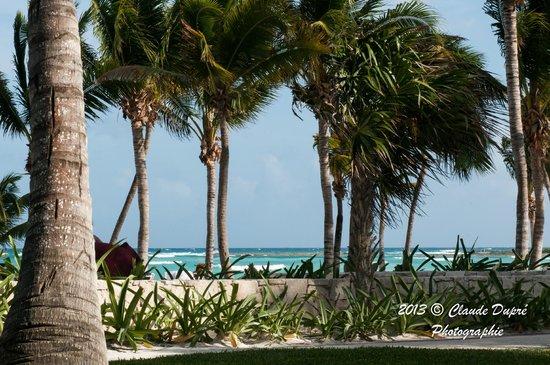 Barcelo Maya Caribe : Plage