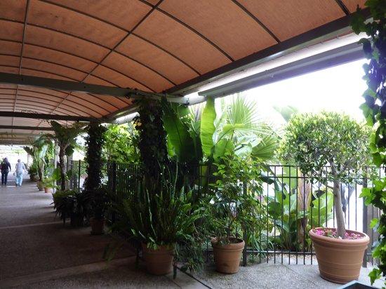 Carmel Mission Inn & Fuse Lounge Cafe: Covered walkway alongside the fenced pool area