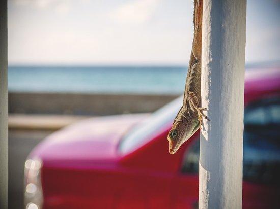 Tres Palmas Inn: from hammock in hotel