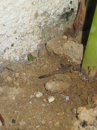 Paradise Loft Villas Jimbaran: Scorpion at the mini garden by the pool