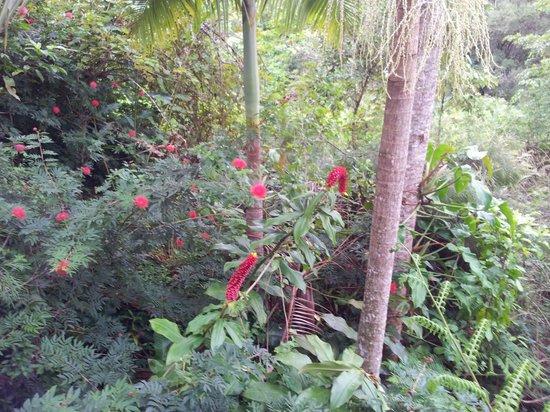 Rose Gums Wilderness Retreat: View from deck