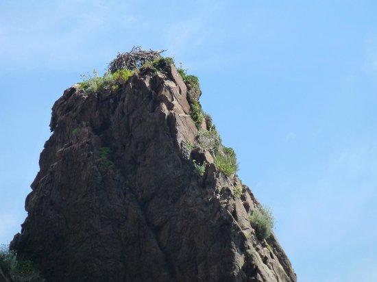 Golfo di Porto, Girolata e Riserva di Scandola: Nid de Balbuzar