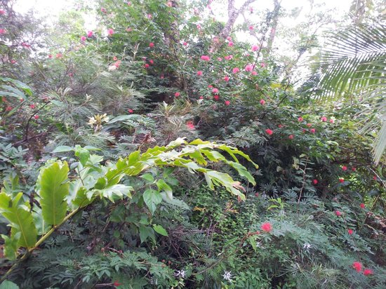 Rose Gums Wilderness Retreat: View from verandah
