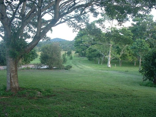 Gumtree on Gillies Bed and Breakfast: View from Verandah