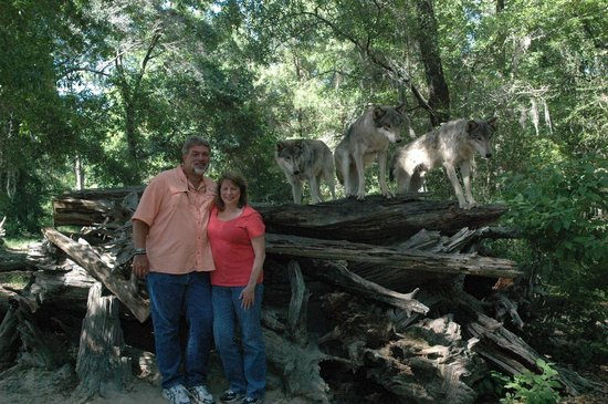 Seacrest Wolf Preserve: Part of the pack