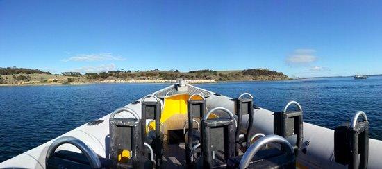 Kangaroo Island Marine Adventures: Marine Adventures Boat
