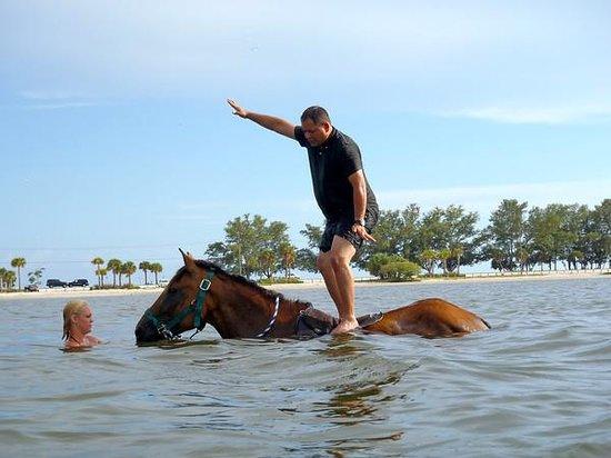 Bradenton, FL: horse surfing