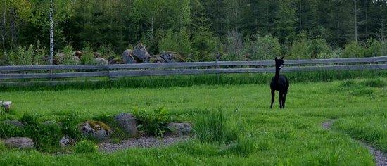 Söderhult Livet på landet: Djur på gården