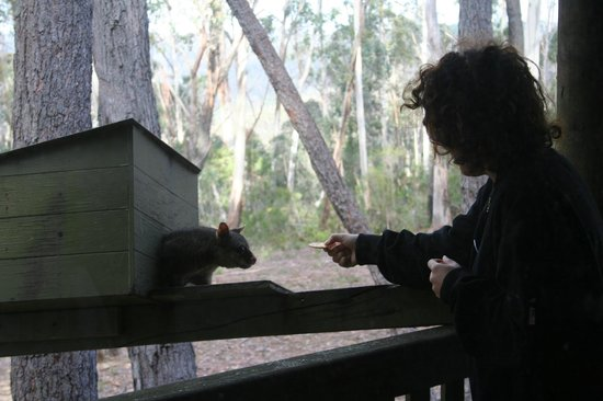 "Federation Gardens & Possums Hideaway: Possum ""Arnott"""