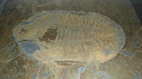 Arouca, Португалия: Resto de Millones de años