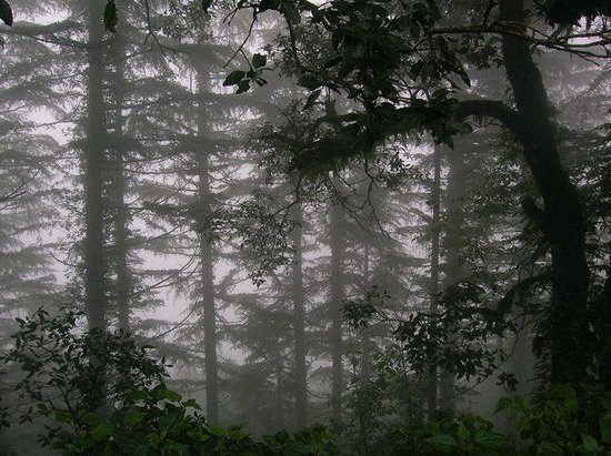 Mussourie Resort Area: the forest