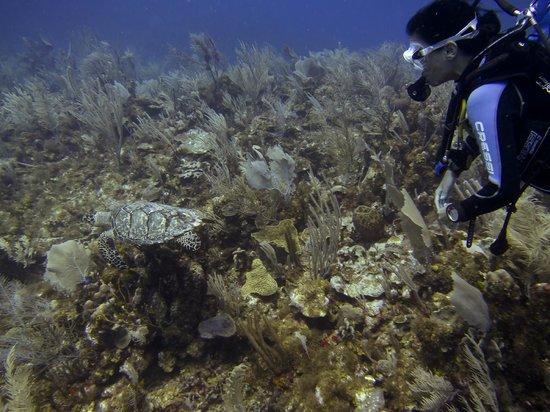 Bahia Divers: Ana y tortuguita