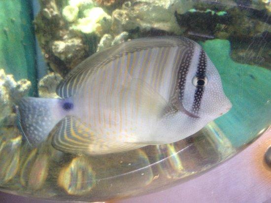 Oceanarium: Fish