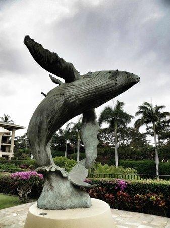 Four Seasons Resort Maui at Wailea: Whale Watching