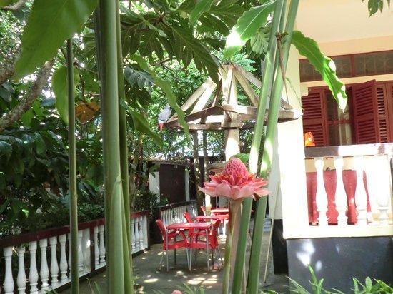Restaurant Celvas: Restaurante Celvas