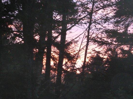 Beach Break Lodge: Sunset through the trees