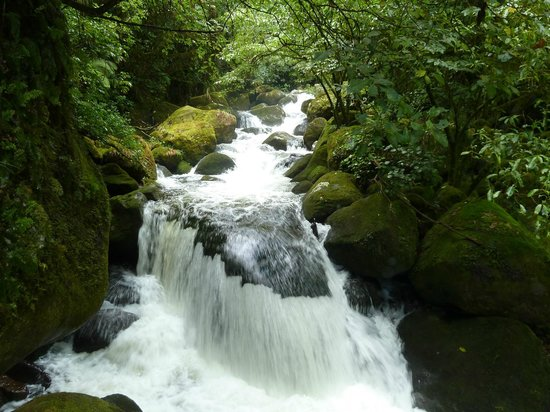 Wairere Falls: Another view of the river