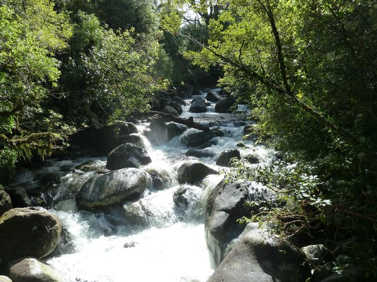 Wairere Falls: Views on the way up