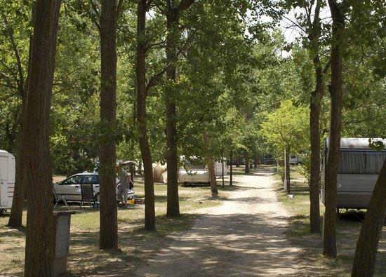 Camping el Vedado : Amplias parcelas con mucha sombra