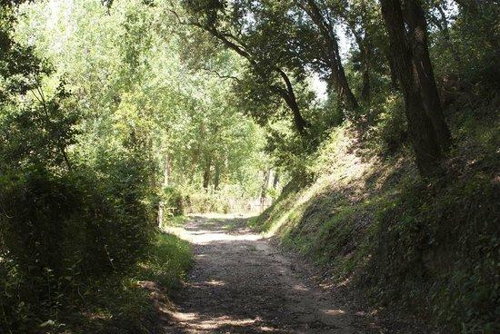 Camping el Vedado : Senderos propios en la zona