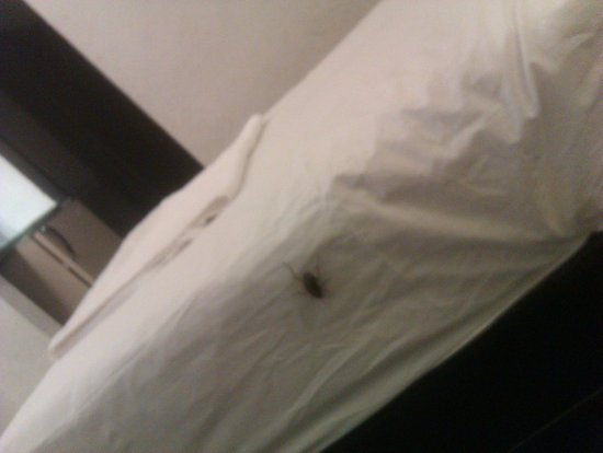 Manorama Hotel : cockroach .. my companion