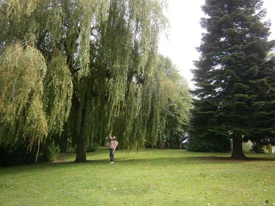 Grosvenor Museum : Il parco