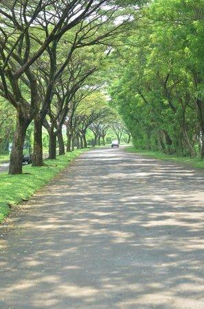 Kalicaa Villa Resort: entering the resort