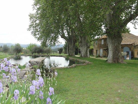 Domaine la Carraire: Fische im barocken Becken