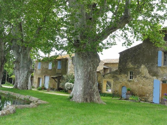 Domaine la Carraire: die alten Platanen