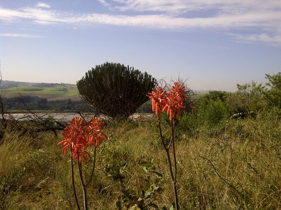 Stanger, Südafrika: The Beauty of the Bush